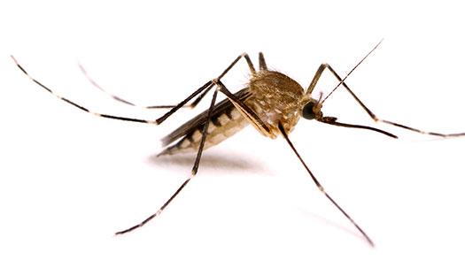 Υπάρχει φυσικός τρόπος να διώξουμε τα κουνούπια